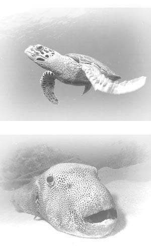 モルディブ/水中写真