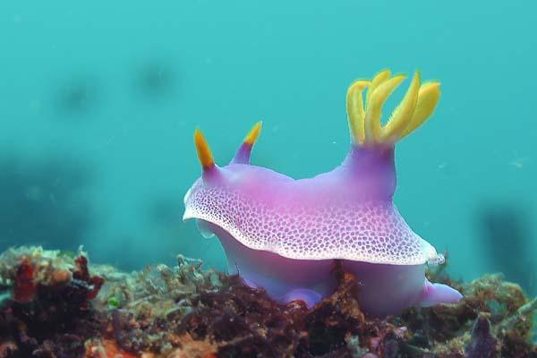 ボラカイ島/水中写真1