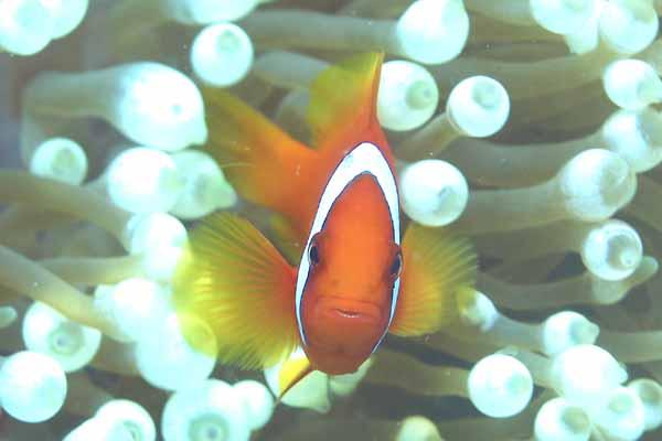 ボラカイ島/水中写真4