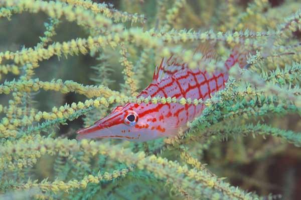 プエルトガレラ2005/ダイビング・水中写真