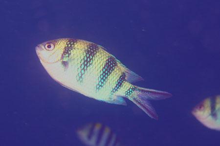 水中写真/ティオマン島
