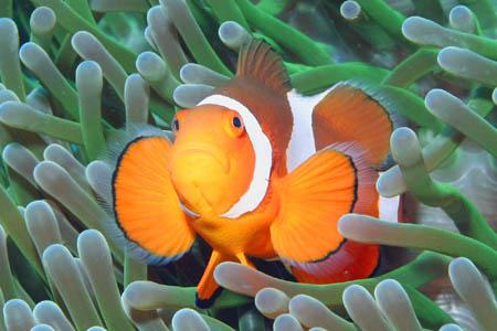 アニラオ/ダイビング・水中写真